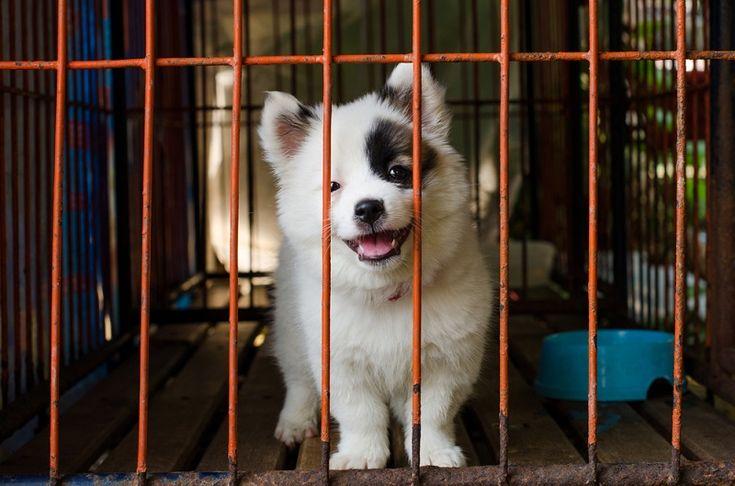 #dogenclosure