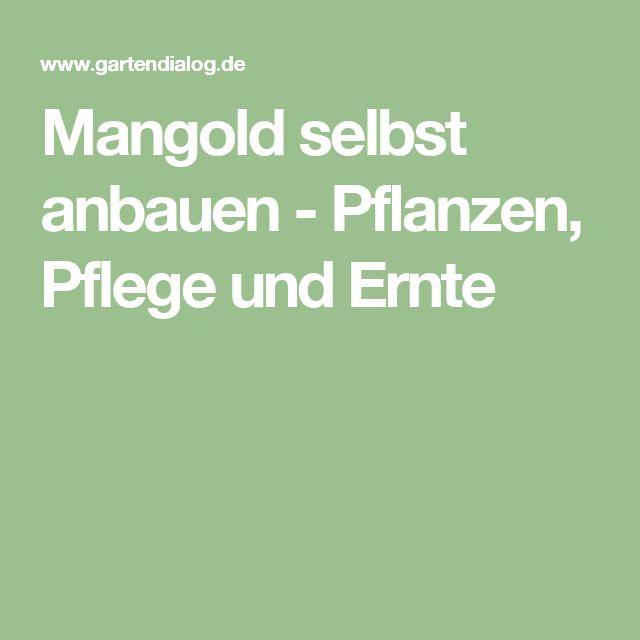 17 Best Ideas About Mangold Pflanzen On Pinterest | Pflanzen ... Fenchel Pflanzen Tipps Pflege Gemuse