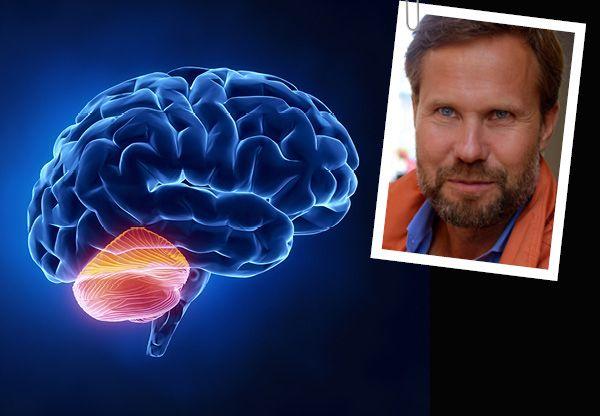 Hjärnan består av fem olika delar, de har olika funktioner samtidigt som de är nära förknippade med och beroende av varandra. I lektion två får vi lära oss merom lillhjärnan som trots namn och storlek har väldigt stor betydelse.