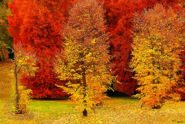 Autunno [Explored + Front Page] by Francesco Campanale, via Flickr
