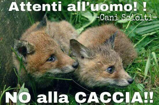 I hate hunters 😡😠 #caccia #cacciatori #hunting #fuciledacaccia #aperturadellacaccia #vietarelacaccia #animallovers #natura #barbarie #crudeltà #ingiustizia #bracconaggio #siallavita #pet #beautifulanimals #natura #naturaselvaggia