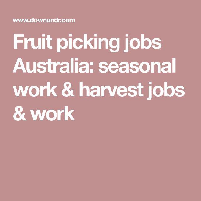 Fruit picking jobs Australia: seasonal work & harvest jobs & work