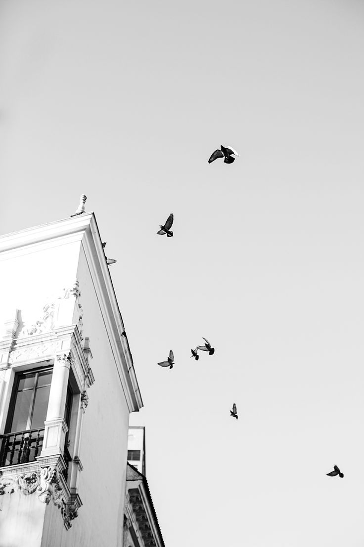 Pin by sophie duke on aesthetics pinterest black and white photography white photography and white aesthetic