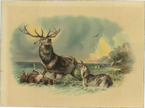 Vintage Print of Wolf Pack Attacking Deer Stag Wolves ...