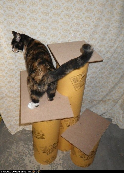 diy cat tree - no tutorial, but supplies available at most home improvement stores, cover with remnant carpet and sisal and you've got a store-bought looking one.