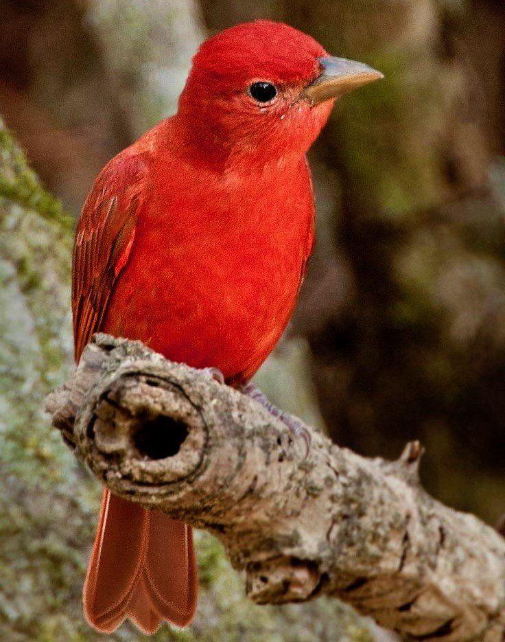 little bird.                                                                                                                                                                                 Más