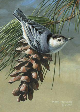 Mark Mueller Wildlife Art bird painting - nuthatch