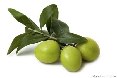 Olive leaf extract is a natural anti-bacterial product which also works as a strong anti-viral product as well. It is used in various ways. The medicinal value of this extract is good for getting desired benefits in the human body. Olive leaf extract is tested and found to be very effective in fighting many health disorders. The main benefits of olive leaf extract are listed below: