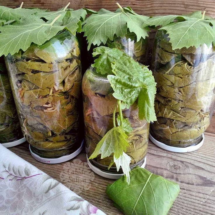 Kavanozda asma yaprağı salamurası, salamura nasıl yapılır