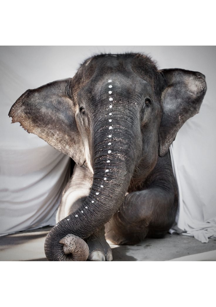Beautiful photograph by Love Warriors. #Photography #Elephant #Print