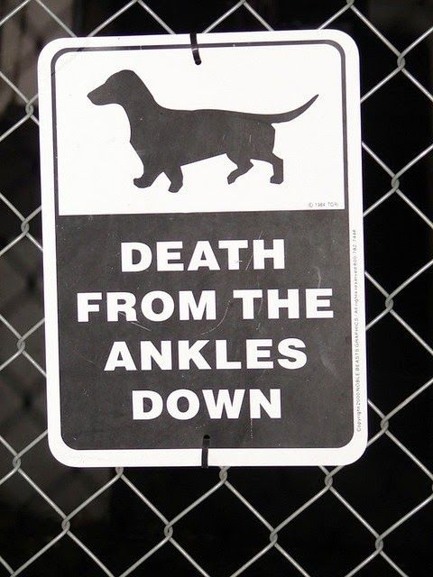 Funny Dachshund Dog Warning Sign