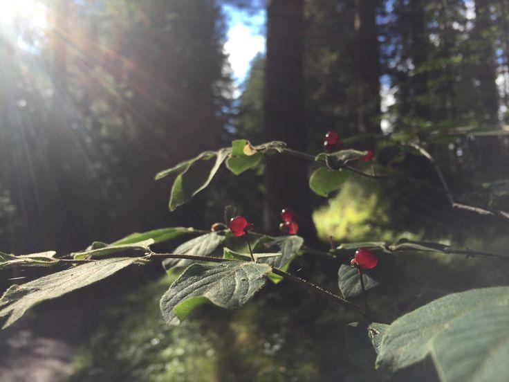 #nature #leafs #foglie #bosco #photo monica gnosca