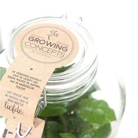 Green Lifestyle Store Plant Coffea Arabica in weckpot ø18x45cm