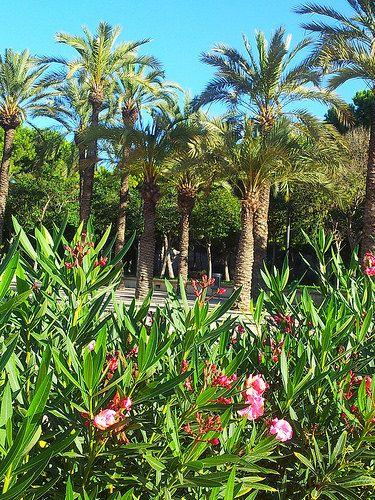 Garden Turia