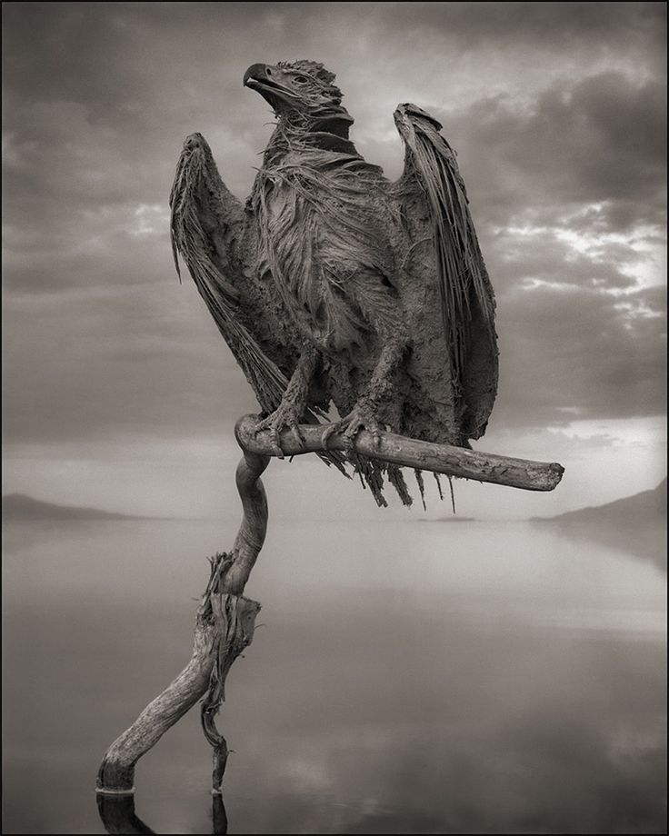 A Deadly Alkaline Lake in Africa Turns Animals into Calcified Statues lakes animals Africa
