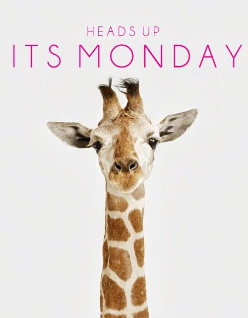 Happy Monday from us at DesertedRoad.com #Mostproductivedayoftheweek: