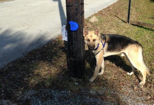 Irmo doctor abandons dog, ties him to a telephone pole while on holiday in Florida! Justice for Roman! | YouSignAnimals.org