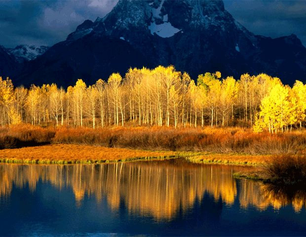 An aspen tree grove that is unlike anything else in this world.