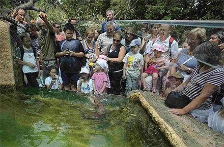 ZOO Plzeň Zoologická a botanická zahrada města Plzně. Zoologická a botanická zahrada Plzeň nabízí poutavou procházku v přírodním 21 ha rozsáhlém areálu, členěném podle 6 biogeografických světových oblastí. V expozicích z roku 2010 se setkáte i se žirafami, nosorožci či hrošíky liberijskými. K návštěvě vybízí i samostatná expozice AKVA TERA na Palackého třídě v centru Plzně s kolekcí plazů, obojživelníků, ryb a bezobratlých.  http://plzen.cz/firma/zoologicka-a-botani