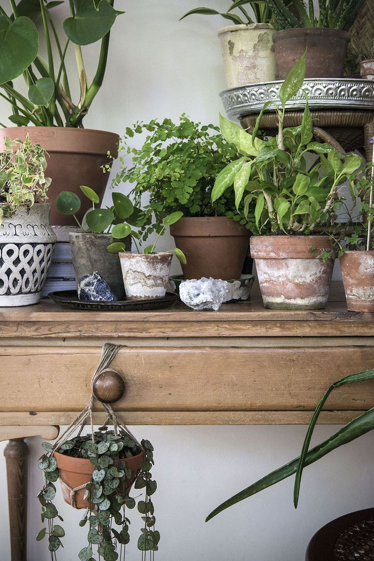 Plant gang op vintage dressoir via Urban Jungle Bloggers