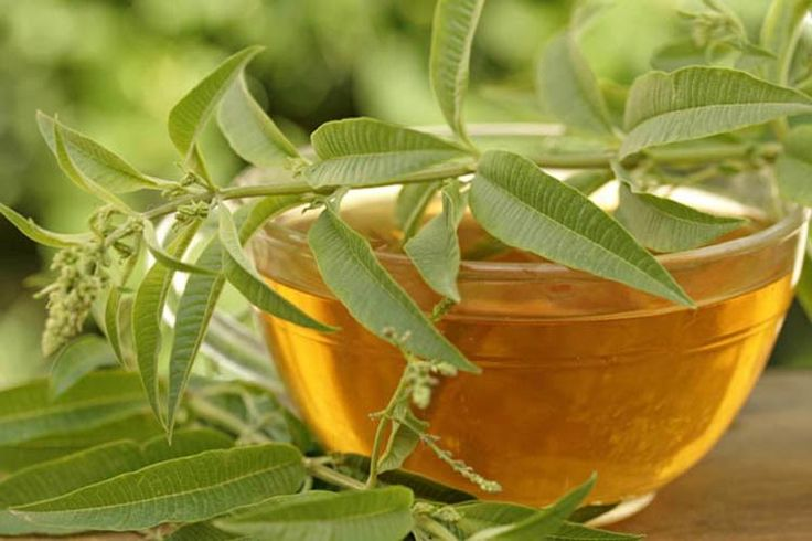 A herb which has compounds called anthraquinones and is 60 cm in length with leaflets colored yellowish-green to pale olive is known as Senna. The aforementioned leaflets and seeds are selected carefully and dried with the purpose of brewing them into tea afterwards. Arabian doctors since the 9th ce