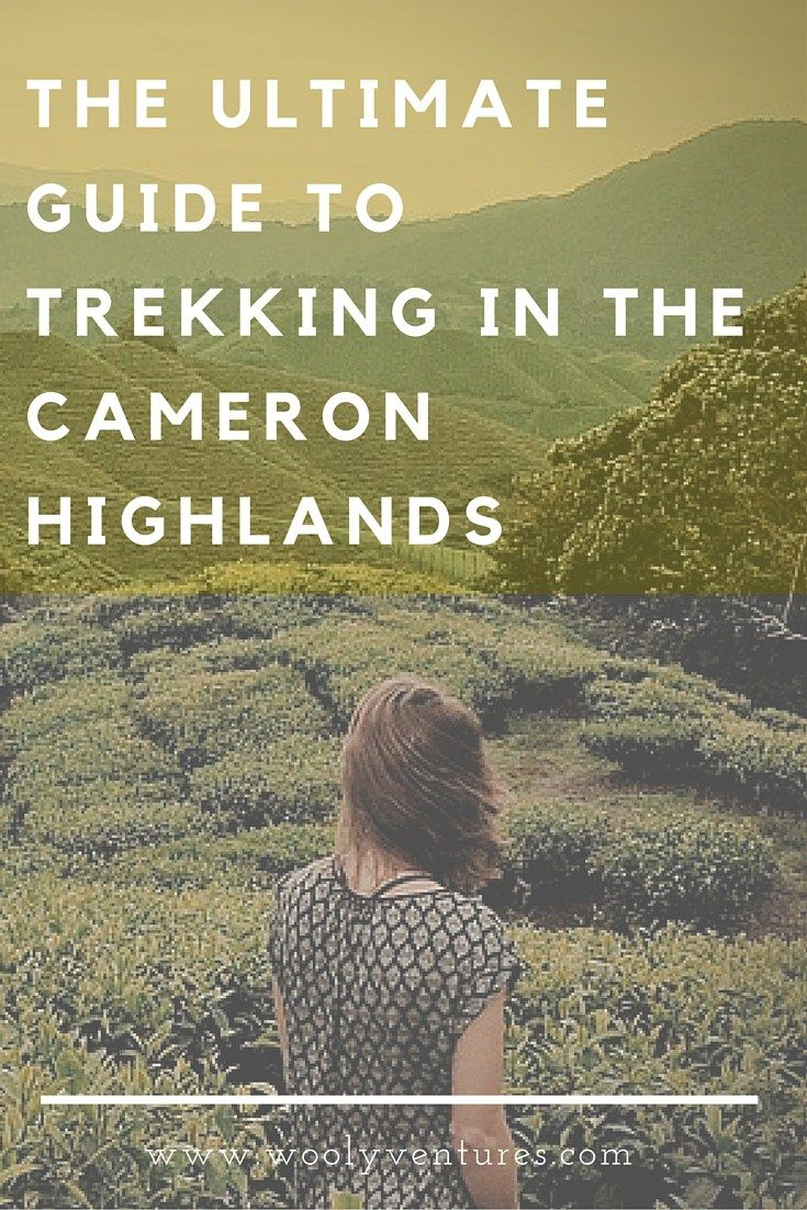 The ultimate guide to trekking in the Cameron Highlands. The Cameron Highlands has an extensive trail network of 14 trails surrounding the towns of Tanah Rata and Brinchang. Which trail is right for you? Read on to find out how you can make the most of your stay in the beautiful Cameron Highlands, Malaysia. #trekking #travel #malaysia