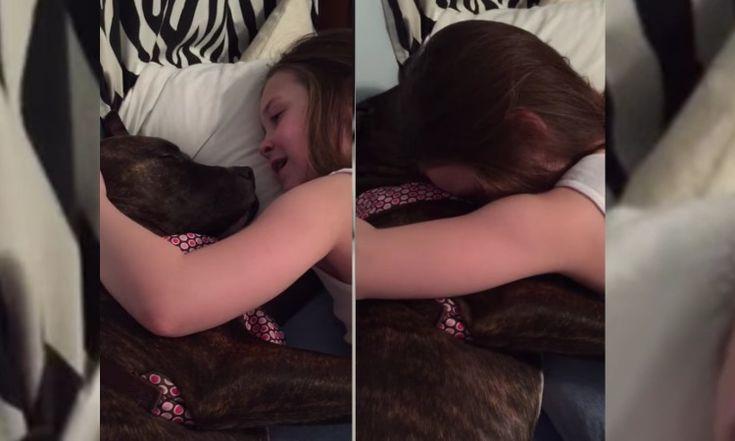 Maravilloso momento en el que una niña de 8 años canta una canción a un perro Pit bull acogido mientras queda completamente dormido: #pitbull #pitbulls #animales #animal #mascota #mascotas #perro #þerros #dog #dogs #niño #niña #pitbulllove #video #videos
