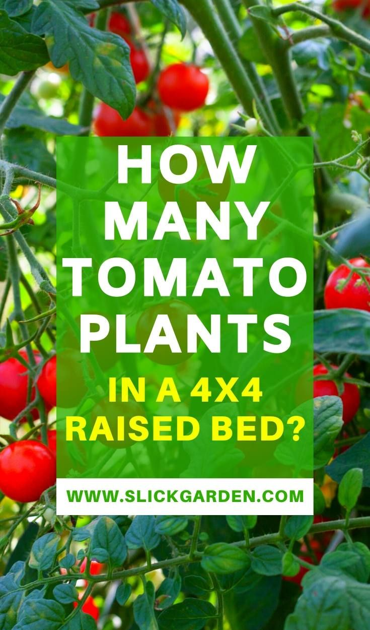 How Many Tomato Plants In A 4x4 Raised Bed in 2020