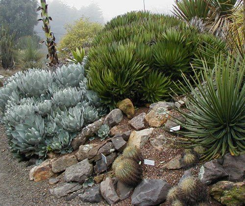 430 best images about desert landscaping ideas on pinterest for Landscaping rocks victoria bc