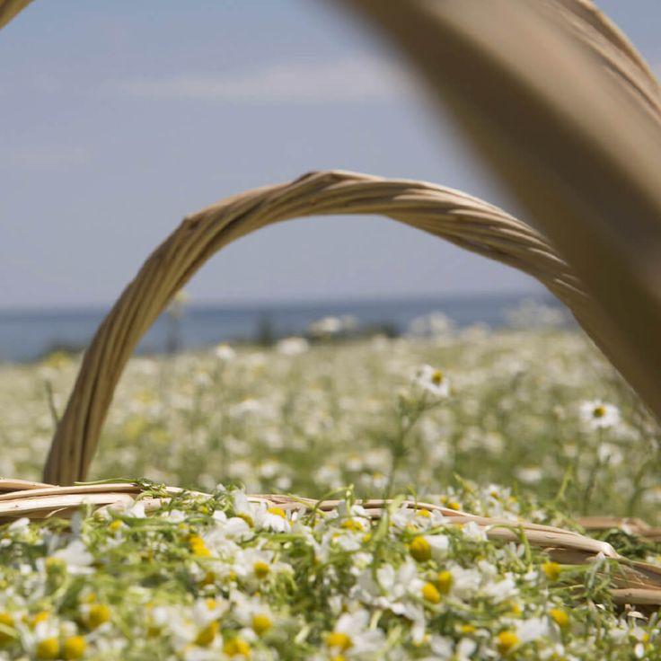 Eucosmia - Δόκιμον - Φυσικά καλλυντικά με εκχυλίσματα από βιολογικές καλλιέργειες του Αγίου Όρους