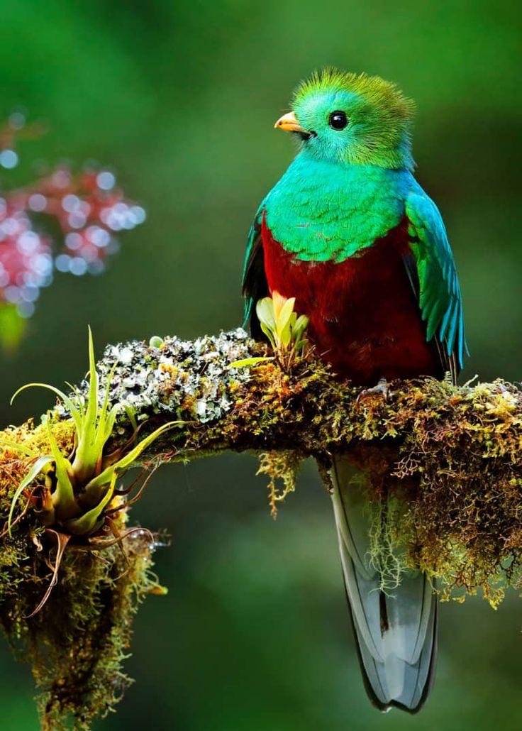 Природные картинки с птицами