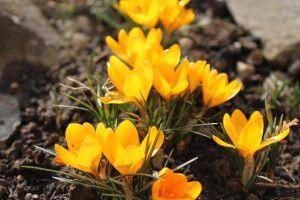 Vychutnajte si jar v prírode