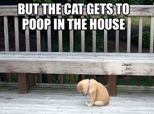 Why the double standard?!?Cat, Heart, Dogs, Little Puppies, Funny, Double Standards, House, Baby Puppies, Animal