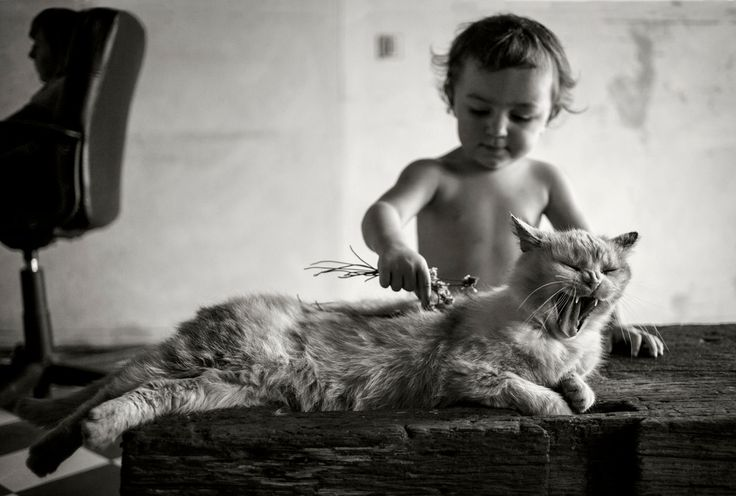 """""""A person that started in to carry a cat home by the tail was getting knowledge that it was always going to be useful to him, and it was not ever going to grow dim or doubtful.""""Mark Twain"""