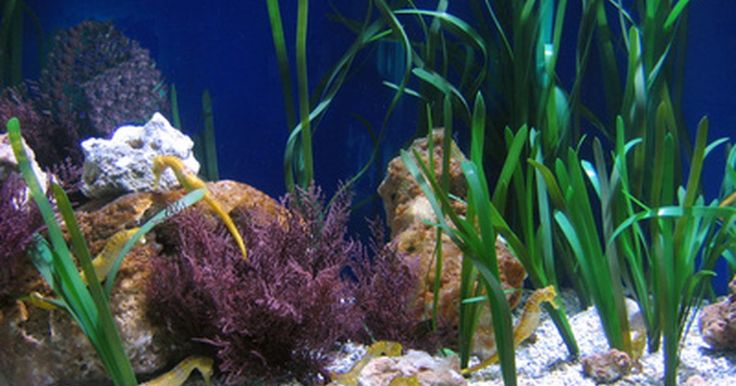 ¿Cuál temperatura es buena para los peces tropicales de agua dulce?. De manera que abriste un acuario de peces tropicales de agua dulce. La decoración es perfecta, el agua ha sido declorada y ya estás listo para comprar algunos peces. Pero, ¡espera! ¿Revisaste la temperatura del agua del acuario? Si colocas nuevos peces y plantas acuáticas dentro de un acuario demasiado frío, o demasiado caliente, tu acuario no va ...