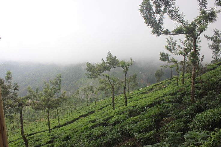 Munnar, the wonderful hillstation of Kerala is a must see for every traveller. Enhance your Munnar experience with Tea Valley Resort