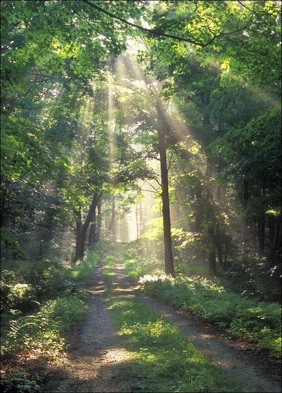 Walking through sunbeams in the woods - #autumn is such a lovely time to #getoutdoors