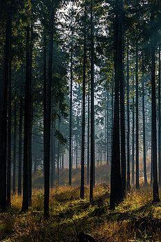 Mystic Forest by Katarzyna Szymanska
