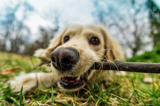 Jak dbać o psie zęby?