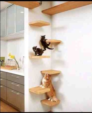 Amazing cat wall scaler