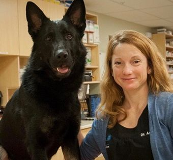 Annie Malouin, DMV, Annie is a veterinarian with Maine Veterinary Medical Center where she specializes in emergency and critical care and is intimately involved in the medical care of working dogs. She also works nationally to provide emergency medical training of operational K9s to military and federal law enforcement medics and handlers.