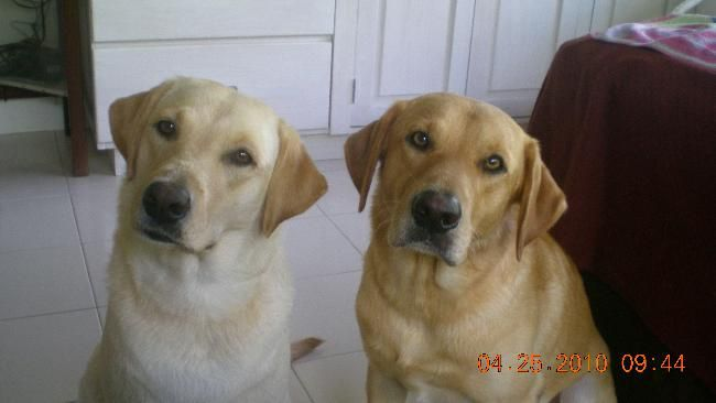 e.g. Pet sitter needed for our 2 labrador boy & girl 1 month ...  House Sitter Needed  Bequia, Island, St Vincent   Spring,Bequia Saint Vincent and the Grenadines  Jun 1,2014 For 1 month | Short Medium Term Not a member? Join today to contact homeowner limehouse We are on a very small island in the Caribbean, a very quiet location but beautiful. We need home sitters to love and love our 2 labs, they need a walk up hill once a day and a little ball throwing & feeding twice a day.