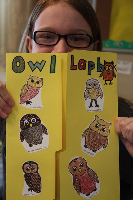 owl lapbooks