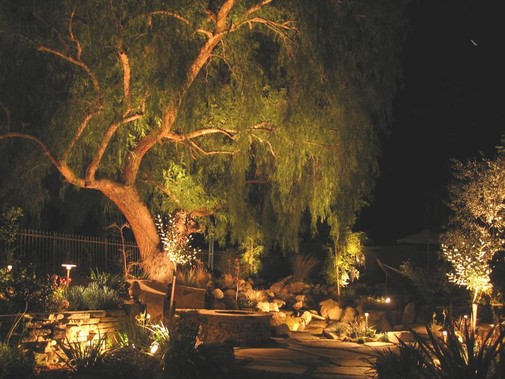 Drought Resistant Garden Ideas California Pepper Tree Lit Up At Night - Photo Courtesy Of