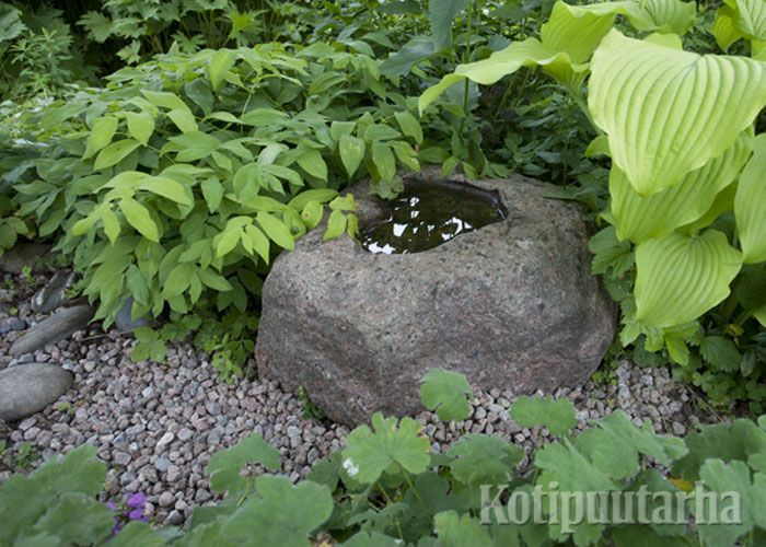 Pienikin vesiaihe on kiva lisä puutarhaan. Tässä kuvassa se on syntynyt kivessä olevaan koloon. www.kotipuutarha.fi