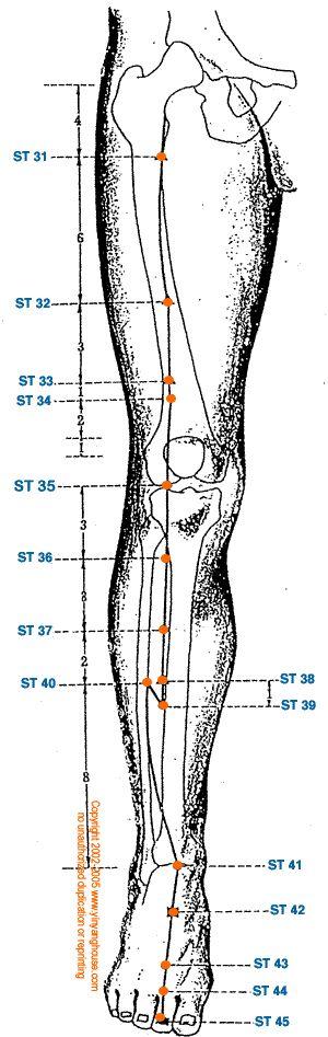 Stomach - Yang Leg : Earth Element