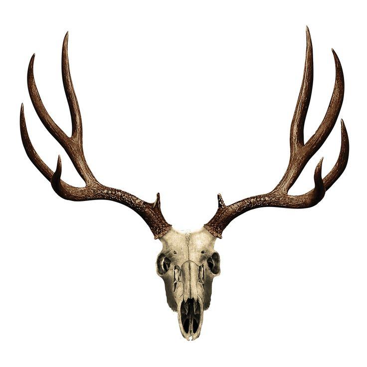 Deer Skull Living Room