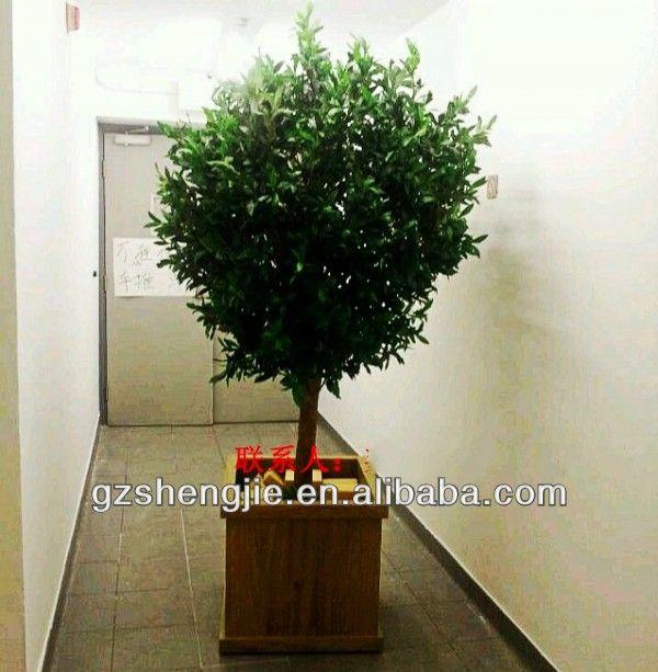 Best 25+ Olive trees for sale ideas on Pinterest | Mediterranean ...