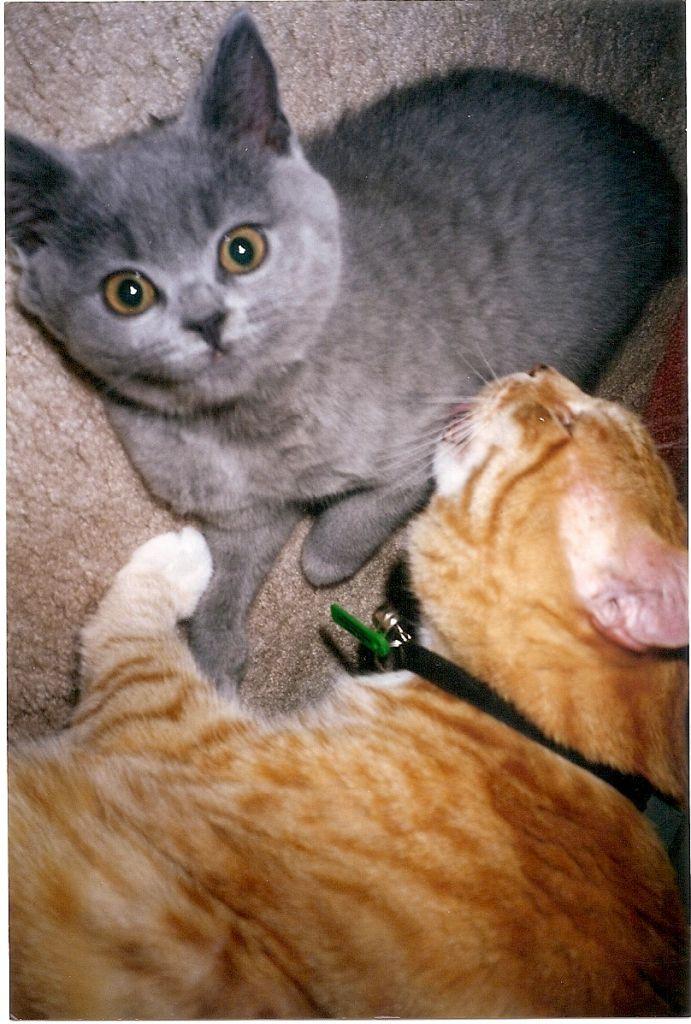 Miss Kitty & Larry