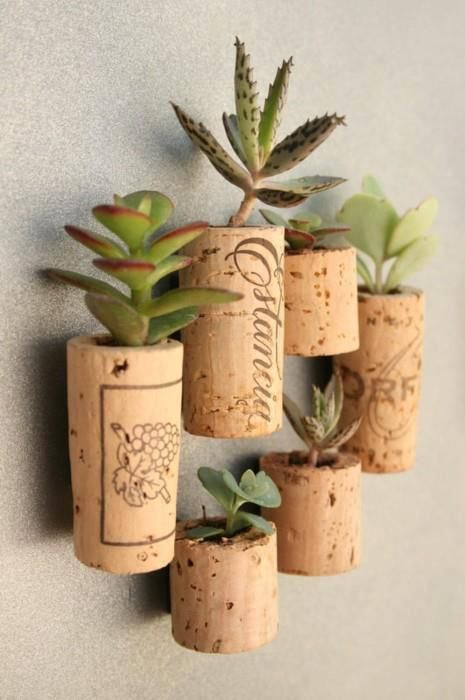 Cacti in wall-mounted cork pots